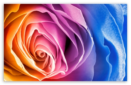 Rainbow Rose ❤ 4K UHD Wallpaper for Wide 16:10 5:3 Widescreen WHXGA WQXGA WUXGA WXGA WGA ; 4K UHD 16:9 Ultra High Definition 2160p 1440p 1080p 900p 720p ; Standard 4:3 5:4 3:2 Fullscreen UXGA XGA SVGA QSXGA SXGA DVGA HVGA HQVGA ( Apple PowerBook G4 iPhone 4 3G 3GS iPod Touch ) ; Tablet 1:1 ; iPad 1/2/Mini ; Mobile 4:3 5:3 3:2 16:9 5:4 - UXGA XGA SVGA WGA DVGA HVGA HQVGA ( Apple PowerBook G4 iPhone 4 3G 3GS iPod Touch ) 2160p 1440p 1080p 900p 720p QSXGA SXGA ;