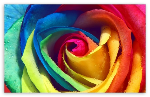 Rainbow Rose Macro HD wallpaper for Wide 16:10 5:3 Widescreen WHXGA WQXGA WUXGA WXGA WGA ; HD 16:9 High Definition WQHD QWXGA 1080p 900p 720p QHD nHD ; Standard 4:3 5:4 3:2 Fullscreen UXGA XGA SVGA QSXGA SXGA DVGA HVGA HQVGA devices ( Apple PowerBook G4 iPhone 4 3G 3GS iPod Touch ) ; Tablet 1:1 ; iPad 1/2/Mini ; Mobile 4:3 5:3 3:2 16:9 5:4 - UXGA XGA SVGA WGA DVGA HVGA HQVGA devices ( Apple PowerBook G4 iPhone 4 3G 3GS iPod Touch ) WQHD QWXGA 1080p 900p 720p QHD nHD QSXGA SXGA ; Dual 16:10 5:3 16:9 4:3 5:4 WHXGA WQXGA WUXGA WXGA WGA WQHD QWXGA 1080p 900p 720p QHD nHD UXGA XGA SVGA QSXGA SXGA ;