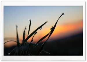 Raindrop on Grass HD Wide Wallpaper for Widescreen
