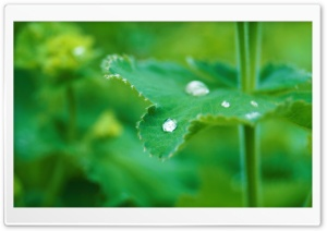 Raindrop on Leaf HD Wide Wallpaper for Widescreen