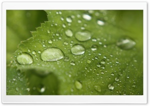Raindrops HD Wide Wallpaper for Widescreen