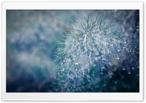 Raindrops Bokeh HD Wide Wallpaper for Widescreen