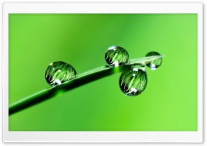 Raindrops, Grass, Macro Ultra HD Wallpaper for 4K UHD Widescreen desktop, tablet & smartphone