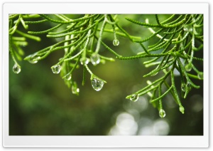 Raindrops Macro HD Wide Wallpaper for 4K UHD Widescreen desktop & smartphone