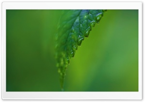 Raindrops On A Green Leaf HD Wide Wallpaper for 4K UHD Widescreen desktop & smartphone