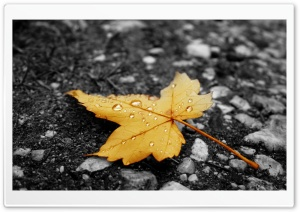 Raindrops On Fallen Leaf HD Wide Wallpaper for Widescreen