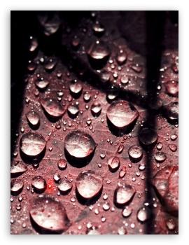 Rain Drops Hd Wallpapers For Mobile Wallpaper Directory