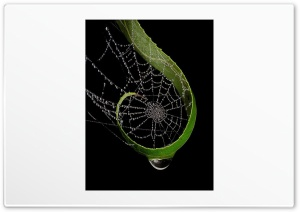 Raindrops On Spider Web HD Wide Wallpaper for Widescreen