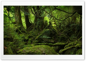 Rainforest HD Wide Wallpaper for Widescreen