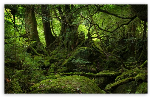 Rainforest hd wallpaper for standard 4:3 5:4 fullscreen uxga xga svga