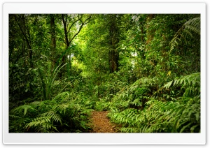 Rainforest Ultra HD Wallpaper for 4K UHD Widescreen desktop, tablet & smartphone
