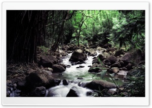 Rainforest Creek HD Wide Wallpaper for Widescreen