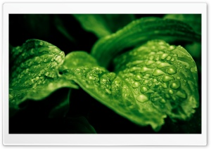 Rainforest Drops HD Wide Wallpaper for Widescreen