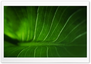 Rainforest Leaf HD Wide Wallpaper for Widescreen