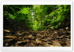 Rainforest Path Ultra HD Wallpaper for 4K UHD Widescreen desktop, tablet & smartphone