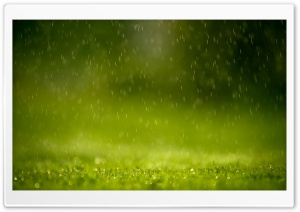 Raining HD Wide Wallpaper for 4K UHD Widescreen desktop & smartphone
