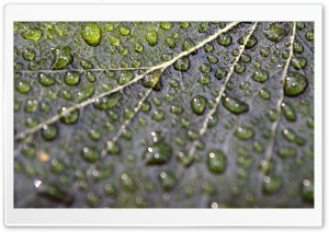 Rainy Bokeh HD Wide Wallpaper for Widescreen