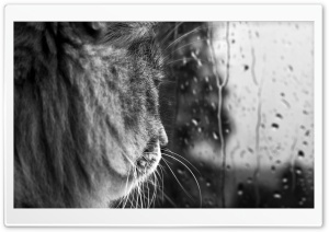 Rainy Day BW HD Wide Wallpaper for Widescreen