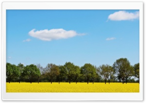 Rape Field HD Wide Wallpaper for Widescreen
