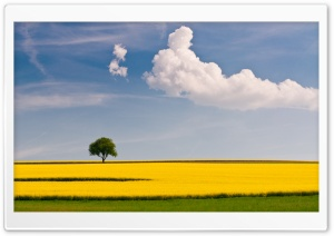 Rape Field and Tree HD Wide Wallpaper for Widescreen