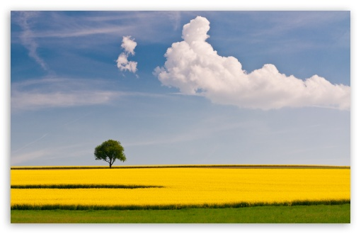 Rape Field and Tree HD wallpaper for Standard 4:3 5:4 Fullscreen UXGA XGA SVGA QSXGA SXGA ; Wide 16:10 5:3 Widescreen WHXGA WQXGA WUXGA WXGA WGA ; HD 16:9 High Definition WQHD QWXGA 1080p 900p 720p QHD nHD ; Other 3:2 DVGA HVGA HQVGA devices ( Apple PowerBook G4 iPhone 4 3G 3GS iPod Touch ) ; Mobile VGA WVGA iPhone iPad PSP Phone - VGA QVGA Smartphone ( PocketPC GPS iPod Zune BlackBerry HTC Samsung LG Nokia Eten Asus ) WVGA WQVGA Smartphone ( HTC Samsung Sony Ericsson LG Vertu MIO ) HVGA Smartphone ( Apple iPhone iPod BlackBerry HTC Samsung Nokia ) Sony PSP Zune HD Zen ; Tablet 2 Android 3 DVGA HVGA HQVGA devices ( Apple PowerBook G4 iPhone 4 3G 3GS iPod Touch ) ; Dual 4:3 5:4 16:10 5:3 16:9 UXGA XGA SVGA QSXGA SXGA WHXGA WQXGA WUXGA WXGA WGA WQHD QWXGA 1080p 900p 720p QHD nHD ;