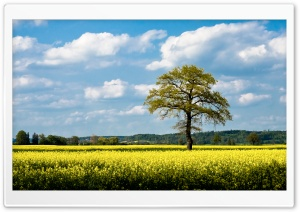 Rapeseed Fields HD Wide Wallpaper for Widescreen
