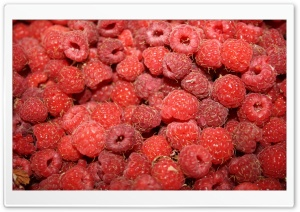 Raspberries HD Wide Wallpaper for Widescreen