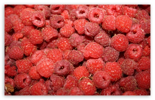 Raspberries HD wallpaper for Wide 16:10 5:3 Widescreen WHXGA WQXGA WUXGA WXGA WGA ; HD 16:9 High Definition WQHD QWXGA 1080p 900p 720p QHD nHD ; UHD 16:9 WQHD QWXGA 1080p 900p 720p QHD nHD ; Standard 4:3 5:4 3:2 Fullscreen UXGA XGA SVGA QSXGA SXGA DVGA HVGA HQVGA devices ( Apple PowerBook G4 iPhone 4 3G 3GS iPod Touch ) ; Tablet 1:1 ; iPad 1/2/Mini ; Mobile 4:3 5:3 3:2 16:9 5:4 - UXGA XGA SVGA WGA DVGA HVGA HQVGA devices ( Apple PowerBook G4 iPhone 4 3G 3GS iPod Touch ) WQHD QWXGA 1080p 900p 720p QHD nHD QSXGA SXGA ; Dual 16:10 5:3 16:9 4:3 5:4 WHXGA WQXGA WUXGA WXGA WGA WQHD QWXGA 1080p 900p 720p QHD nHD UXGA XGA SVGA QSXGA SXGA ;