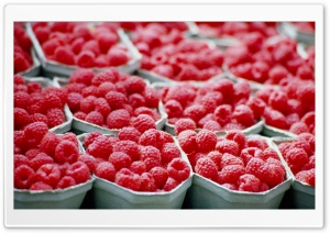Raspberries - Food HD Wide Wallpaper for Widescreen