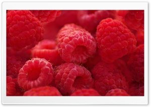 Raspberries Macro Ultra HD Wallpaper for 4K UHD Widescreen desktop, tablet & smartphone