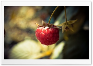 Raspberry HD Wide Wallpaper for Widescreen