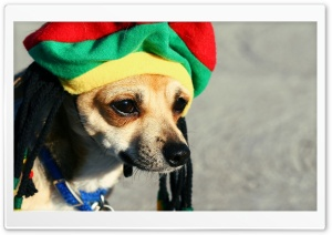 Rasta Dog HD Wide Wallpaper for Widescreen