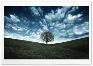 Raven Tree HD Wide Wallpaper for Widescreen