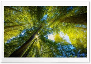 Rays Forest Ultra HD Wallpaper for 4K UHD Widescreen desktop, tablet & smartphone