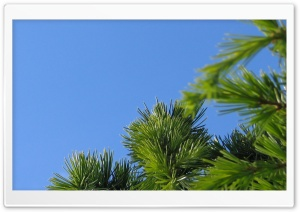 Reach For The Sky HD Wide Wallpaper for Widescreen