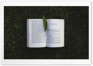 Reading A Book Outside HD Wide Wallpaper for Widescreen