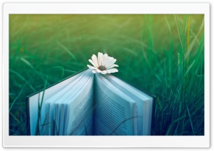 Reading Invitation Ultra HD Wallpaper for 4K UHD Widescreen desktop, tablet & smartphone