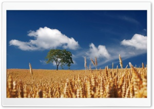 Ready to be Harvested HD Wide Wallpaper for Widescreen