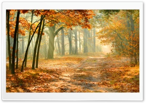 Real Enchanted Forest HD Wide Wallpaper for Widescreen