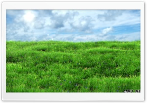Realistic Grass HD Wide Wallpaper for Widescreen