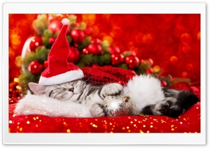 Really cute Christmas kitten HD Wide Wallpaper for Widescreen