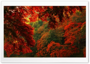 Red and Green Forest HD Wide Wallpaper for Widescreen