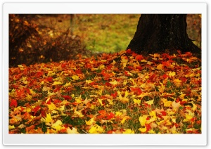 Red And Yellow Autumn Leaves HD Wide Wallpaper for Widescreen