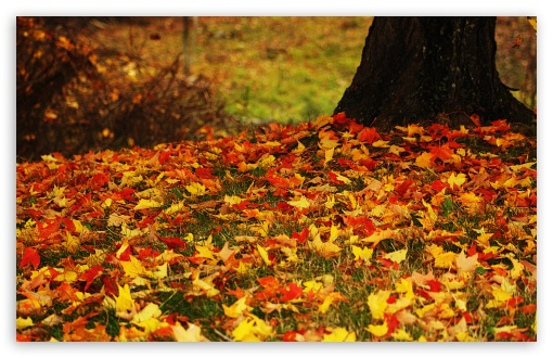 Red And Yellow Autumn Leaves HD wallpaper for Wide 16:10 5:3 Widescreen WHXGA WQXGA WUXGA WXGA WGA ; HD 16:9 High Definition WQHD QWXGA 1080p 900p 720p QHD nHD ; UHD 16:9 WQHD QWXGA 1080p 900p 720p QHD nHD ; Standard 4:3 5:4 3:2 Fullscreen UXGA XGA SVGA QSXGA SXGA DVGA HVGA HQVGA devices ( Apple PowerBook G4 iPhone 4 3G 3GS iPod Touch ) ; Tablet 1:1 ; iPad 1/2/Mini ; Mobile 4:3 5:3 3:2 16:9 5:4 - UXGA XGA SVGA WGA DVGA HVGA HQVGA devices ( Apple PowerBook G4 iPhone 4 3G 3GS iPod Touch ) WQHD QWXGA 1080p 900p 720p QHD nHD QSXGA SXGA ; Dual 16:10 5:3 16:9 4:3 5:4 WHXGA WQXGA WUXGA WXGA WGA WQHD QWXGA 1080p 900p 720p QHD nHD UXGA XGA SVGA QSXGA SXGA ;