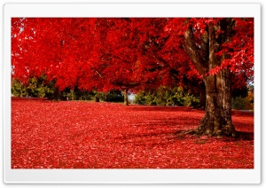 Red Autumn HD Wide Wallpaper for Widescreen