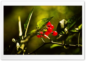 Red Berries Bokeh HD Wide Wallpaper for Widescreen