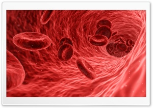 Red Blood Cells Microscope HD Wide Wallpaper for Widescreen