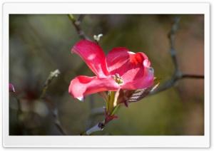 Red Bloom Ultra HD Wallpaper for 4K UHD Widescreen desktop, tablet & smartphone