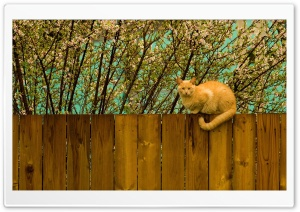 Red Cat On Fence HD Wide Wallpaper for Widescreen
