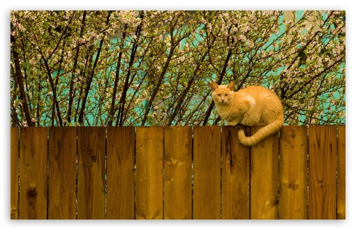 Red Cat On Fence HD wallpaper for Wide 16:10 5:3 Widescreen WHXGA WQXGA WUXGA WXGA WGA ; HD 16:9 High Definition WQHD QWXGA 1080p 900p 720p QHD nHD ; Standard 4:3 5:4 3:2 Fullscreen UXGA XGA SVGA QSXGA SXGA DVGA HVGA HQVGA devices ( Apple PowerBook G4 iPhone 4 3G 3GS iPod Touch ) ; Tablet 1:1 ; iPad 1/2/Mini ; Mobile 4:3 5:3 3:2 16:9 5:4 - UXGA XGA SVGA WGA DVGA HVGA HQVGA devices ( Apple PowerBook G4 iPhone 4 3G 3GS iPod Touch ) WQHD QWXGA 1080p 900p 720p QHD nHD QSXGA SXGA ; Dual 16:10 5:3 16:9 4:3 5:4 WHXGA WQXGA WUXGA WXGA WGA WQHD QWXGA 1080p 900p 720p QHD nHD UXGA XGA SVGA QSXGA SXGA ;